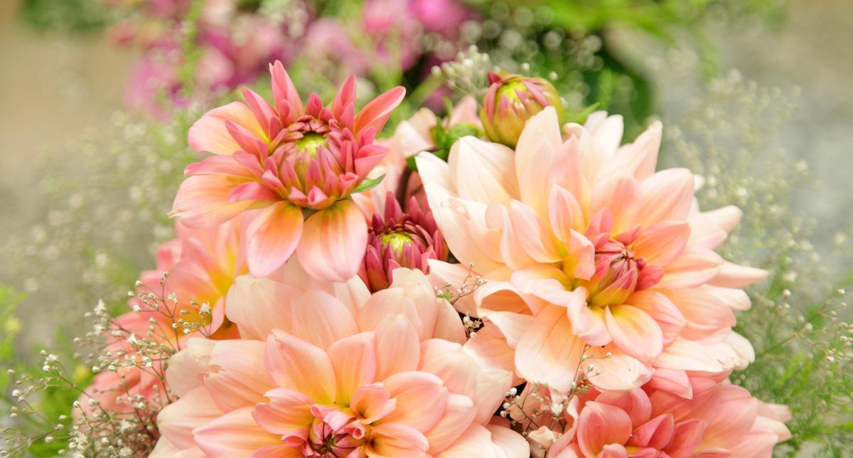 Blumen Und Pflanzen Abo hess blumen pflanzen leben